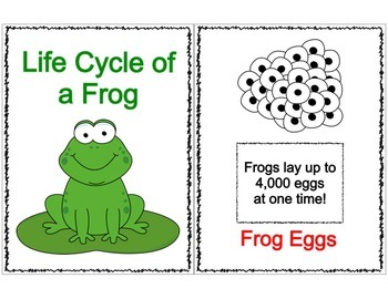 Life Cycle of the Frog Flip Booklet