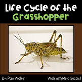 Life Cycle of the Grasshopper for K-2 | Distance Learning