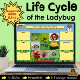 Life Cycle of the Ladybug Digital Interactive Notebook for Google Slides