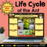 Life Cycle of the Ant Digital Interactive Notebook for Goo