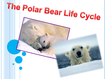 Life Cycle of the polar bear