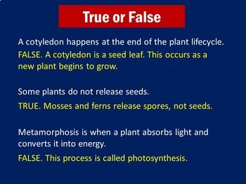 Plant Life Cycle Activity | PowerPoint