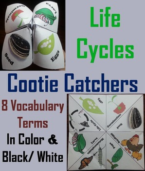 Life Cycles Activity Foldable