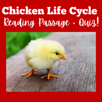 Chicken Life Cycle Activity | Chicken Life Cycle Reading Passage