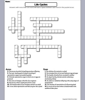 Life Cycles Worksheet/ Crossword Puzzle