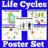Life Cycles Powers | Life Cycles of Animals | Science Posters
