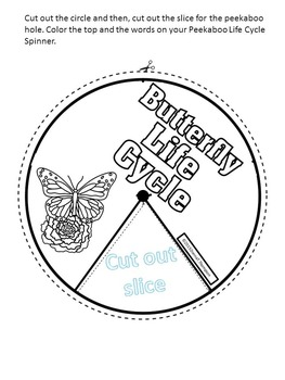 """Butterfly """"Life Cycle"""""""