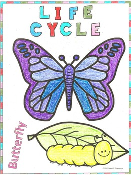 Butterfly Life Cycle: