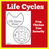 Life Cycle Craft | Life Cycle of Animals Activities | Life Cycles Craft