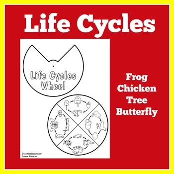 Life Cycles Craft