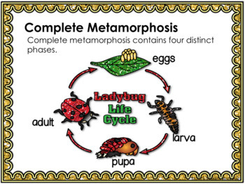 Animal Life Cycles Activities