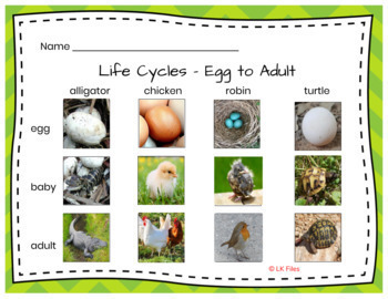 Life Cycles for Learning Centers:  Alligator, Butterfly, Chicken, and more...