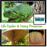Life Cycles And Living Processes