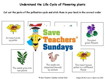 Life Cycles Bundle of 14 lessons (1st to 3rd Grade)