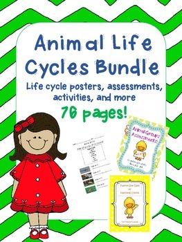 Life Cycles Bundle *Animals*