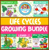 Life Cycles Bundle Preschool and Kinder