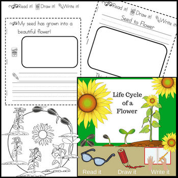 Life Cycles BUNDLE ~ Read it! Draw it! Write it!
