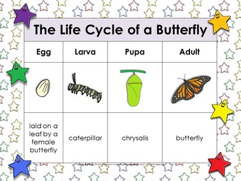 Life Cycles: Butterfly Matching Game Sort - Monarch - egg, larva, pupa, adult