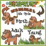 TPT EXCLUSIVE BUNDLE - Life Cycles Clip Art - Mammals