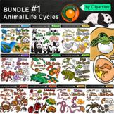 Animal Life Cycles Clipart Bundle