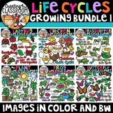 Life Cycles Clipart Growing Bundle {Life Cycles Clipart}