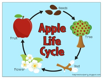 Life Cycles Diagrams & Coloring Pages