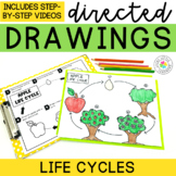Life Cycles Directed Drawings   Pumpkin Directed Drawing  