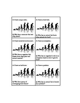 Life Cycles/Food Chain