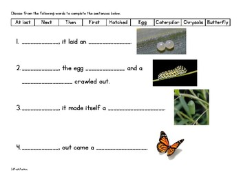 Life Cycles: Frog and Butterfly