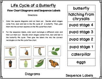 Life Cycles, Frogs, Butterflies, Spring, Habitats, Activities