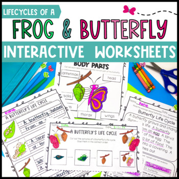 Frog and Butterfly Life Cycles