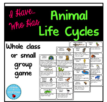 Life Cycles Game
