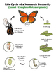 Life Cycles - Growth and Development of Organisms - Grade 3 NGSS