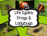 Life Cycles: Non-Fiction Text for the Common Core