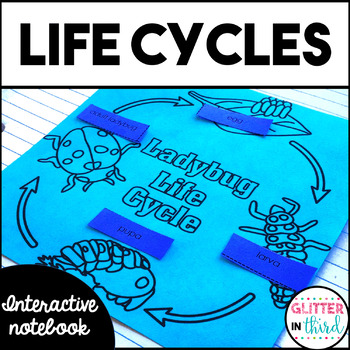 Life Cycles of Butterfly, Frog, Ladybug, & Plant  Interactive Notebook