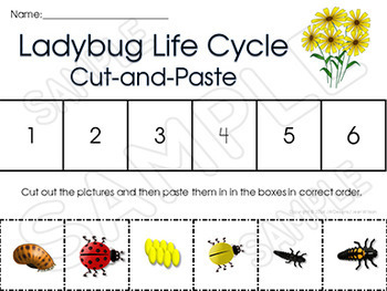 Hqdefault moreover Image Width   Height   Version in addition Original further Image Width   Height   Version in addition Forensic Science Worksheet Answers. on plant life cycle worksheet