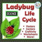 Life Cycles LADYBUG LIFE CYCLE Unit with Craftivity