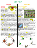 Life Cycles (Lady Bug v/s Butterfly)-Paired text