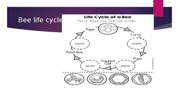 Life Cycles Lesson