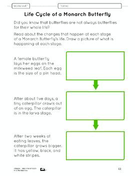 Life Cycles Lesson Plan Grade 2