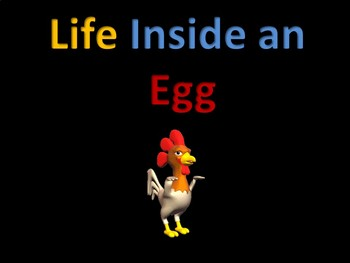 Life Cycles : Life inside an egg (chicken) 90% ANIMATED!!