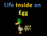 Life Cycles : Life inside an egg (duck) ANIMATED!!! UNBELIEVEABLE
