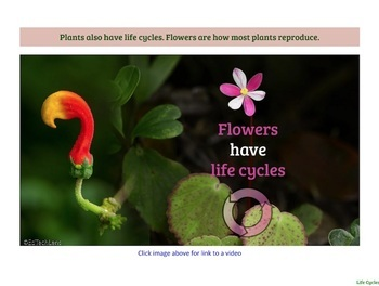 Life Cycles - Living Things are Born, Grow, and Reproduce (PDF)