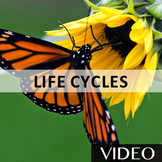 Life Cycles - Plant, Insect, and Animal Life Cycles Rap Video [3:18]