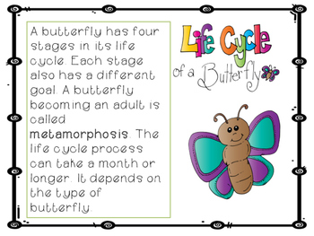 Life Cycles: Plants, Animals & Insects