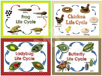 Life Cycles Posters for your science unit