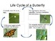 Life Cycles Powerpoint