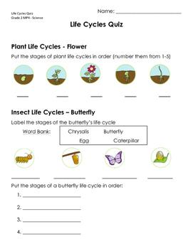 Life Cycles Quiz