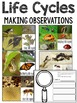 Life Cycles Resources: Butterflies, Ladybugs, Ants, Bees & Frogs, Oh My!