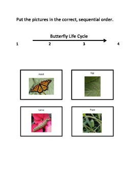 Life Cycles Science